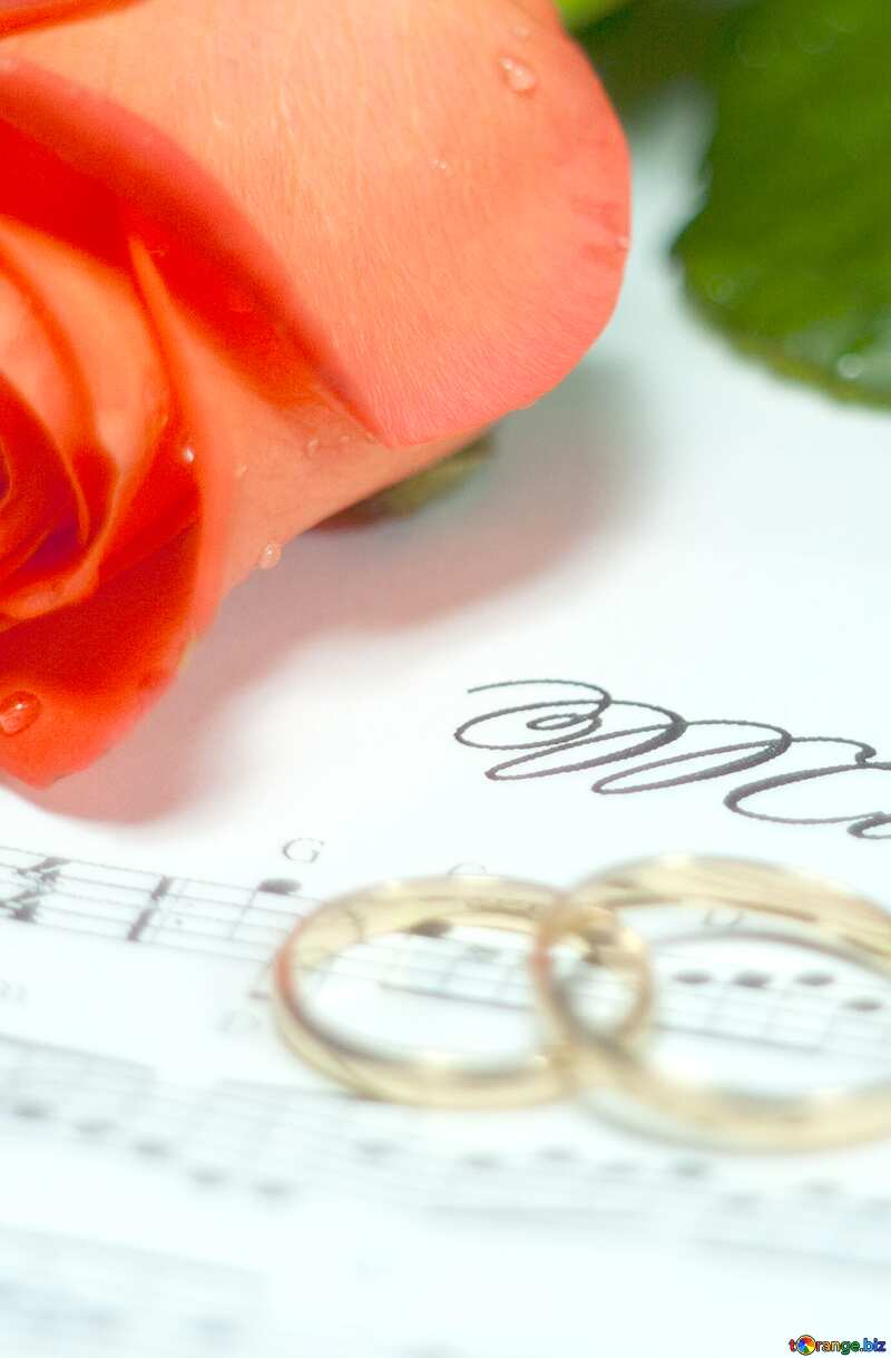 card rose rings music note №7230