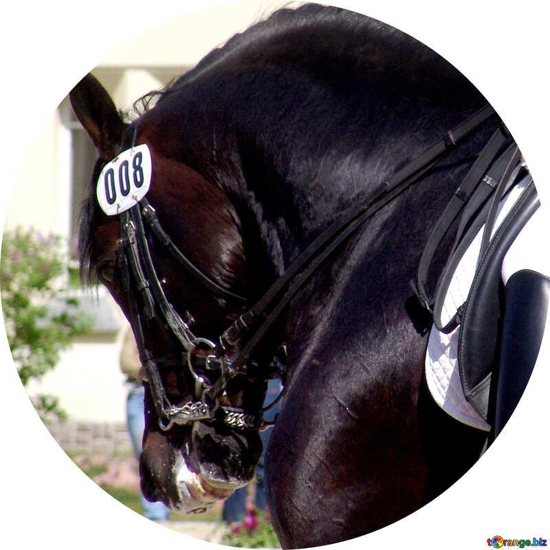 Image for profile picture Black stallion. Dressage. №761