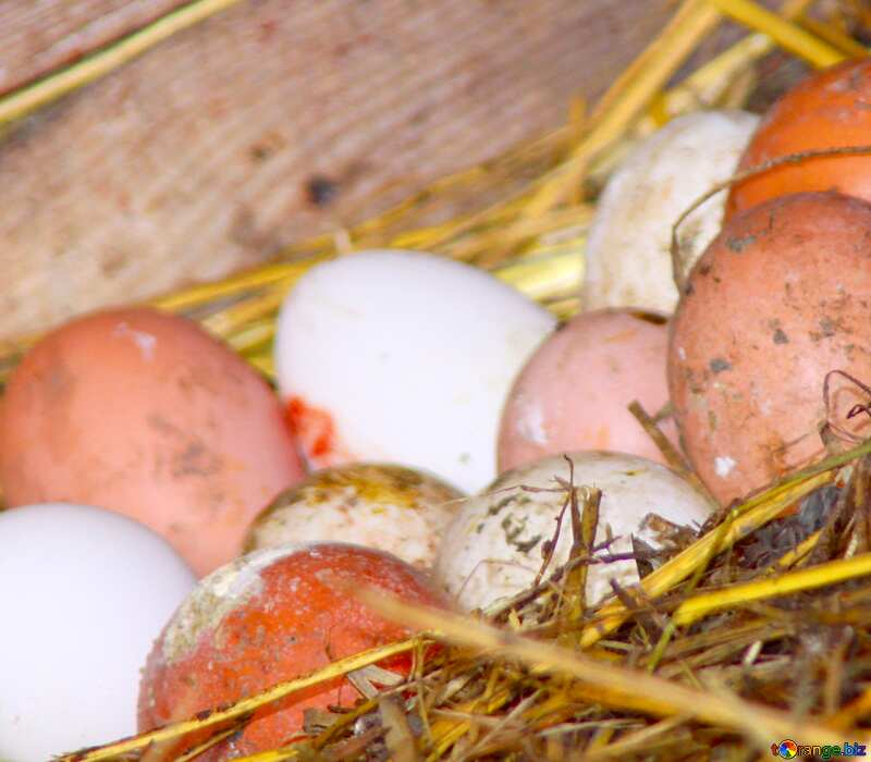 Image for profile picture Fresh chicken eggs in the henhouse. №773