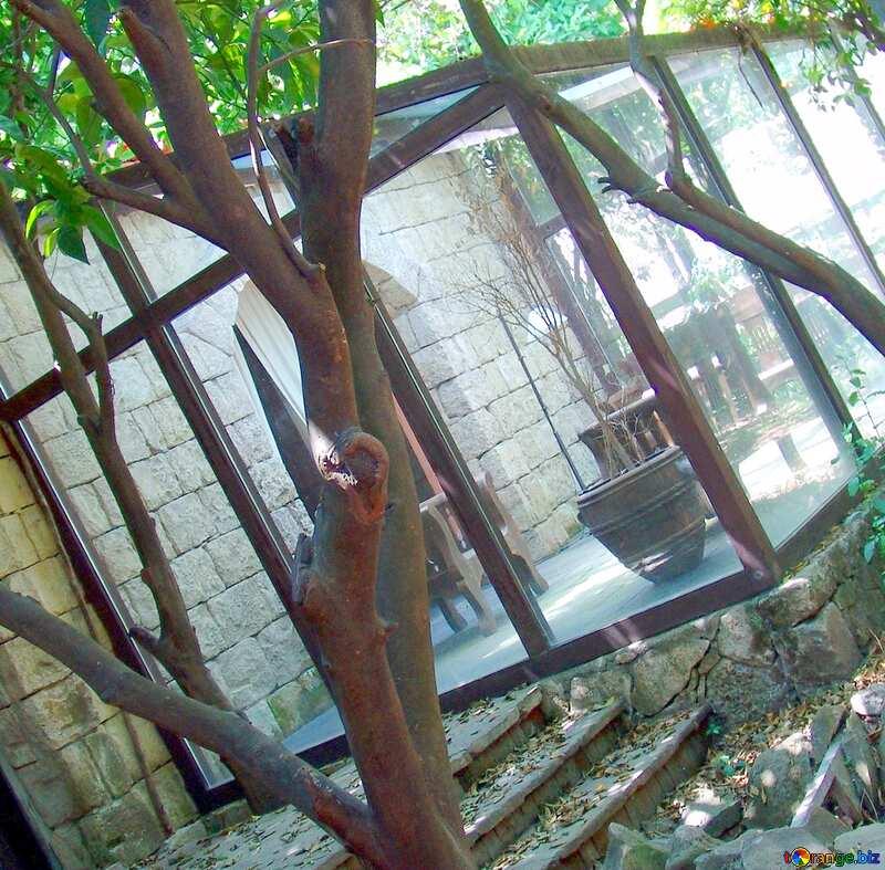 Image for profile picture Winter  garden. №8548
