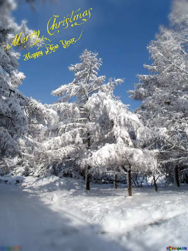 Christmas forest №10543