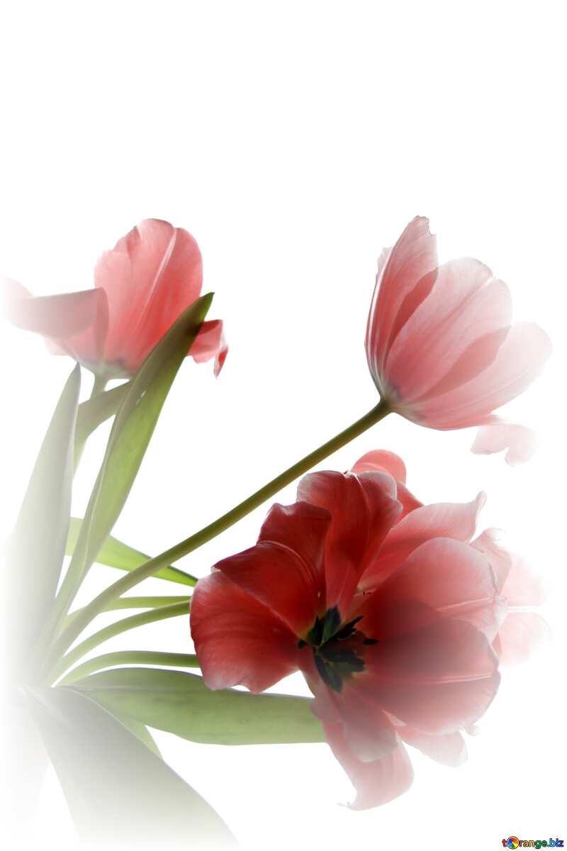 Red color. Tulip Bouquet. №882