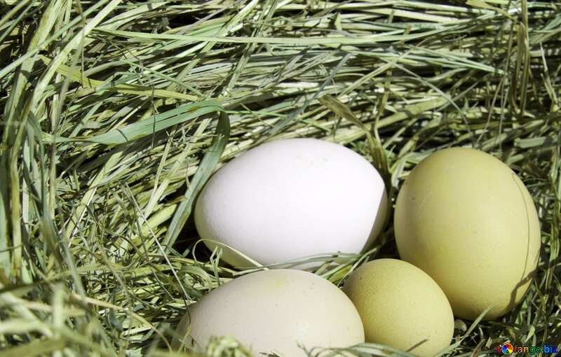 Four  Eggs in the nest №1069