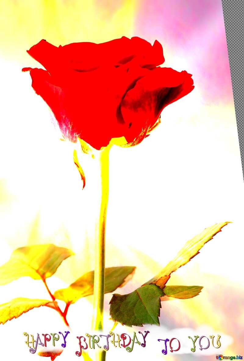 rose flower  happy birthday card background №17057