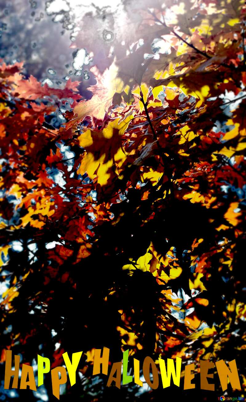 Autumn forest frame happy halloween №38543