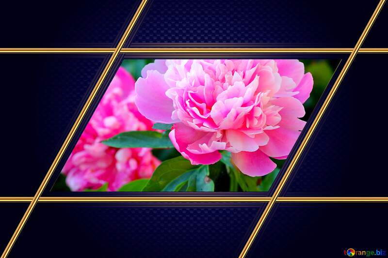 Flowers of peonies Carbon gold frame Blue hi-tech №32639
