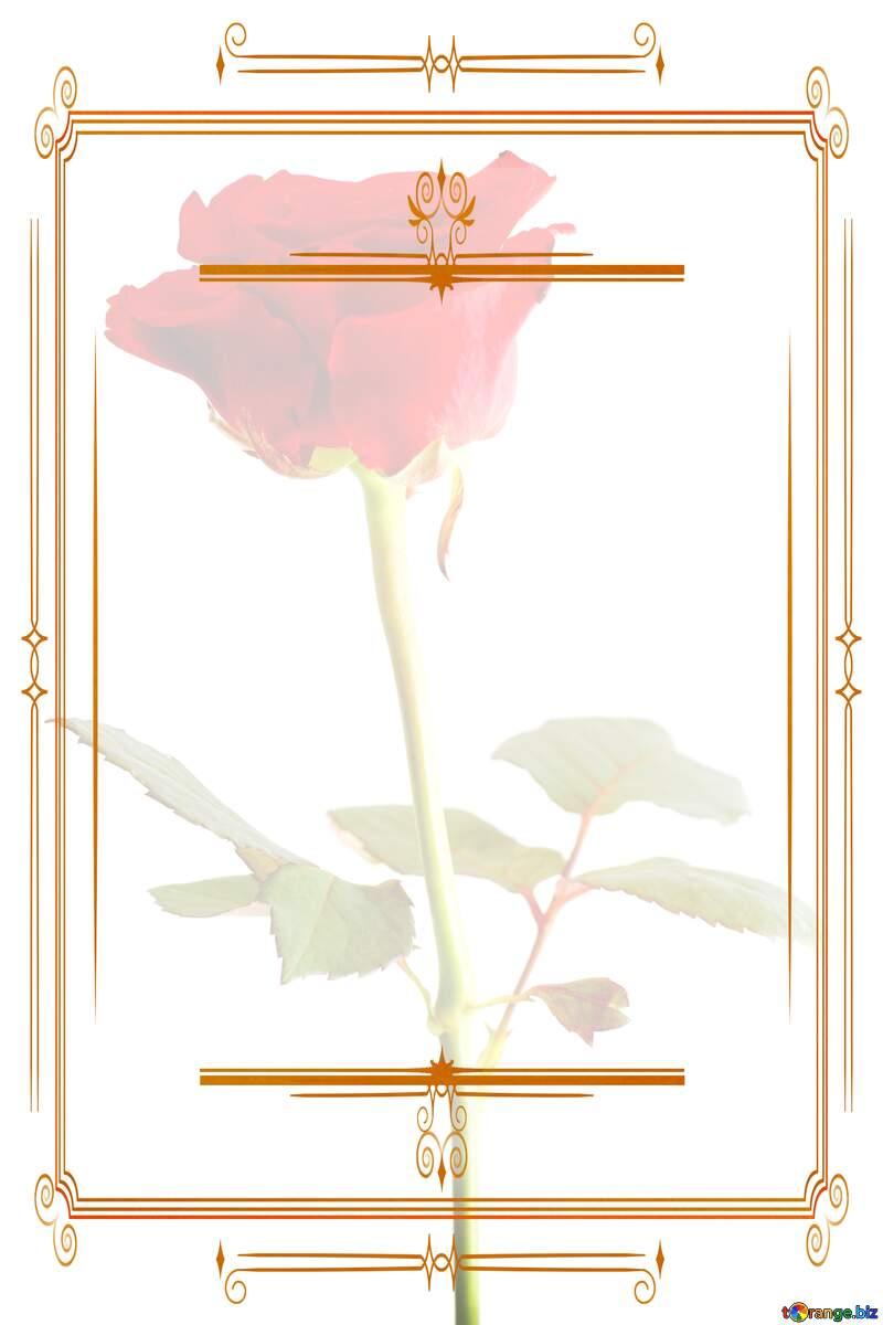 Texture rose flower  Vintage frame retro clip art light template №17057