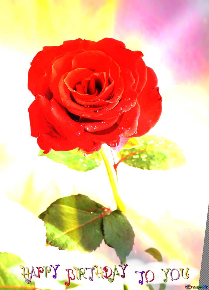 Red beautiful rose flower  happy birthday card №17031