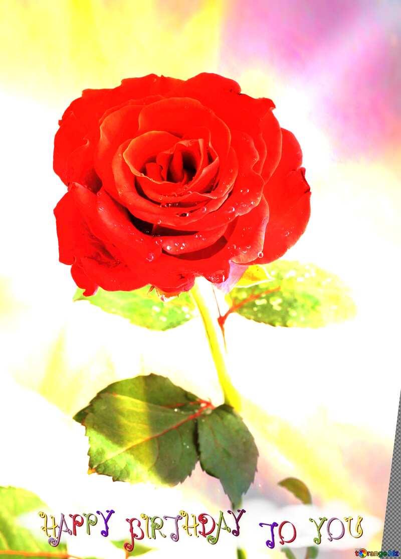 Red beautiful rose flower  happy birthday card №17031