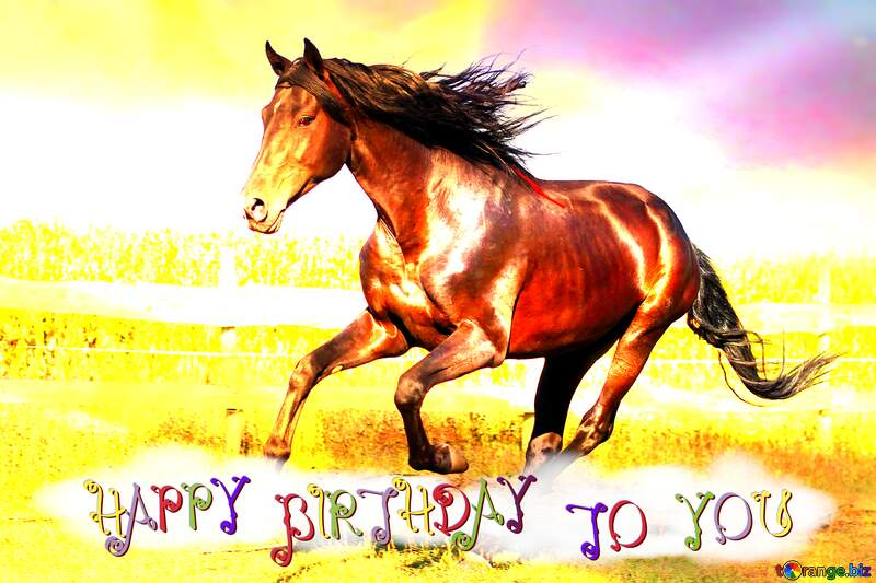 Horse birthday card happy birthday №36664