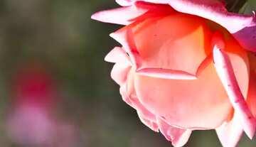 Effect upside down. Vivid Colors. Fragment.