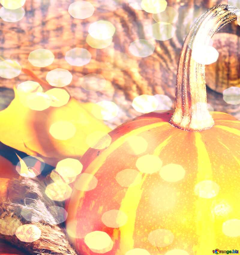 Beautiful picture with pumpkin and autumn leaves bokeh  background №35453