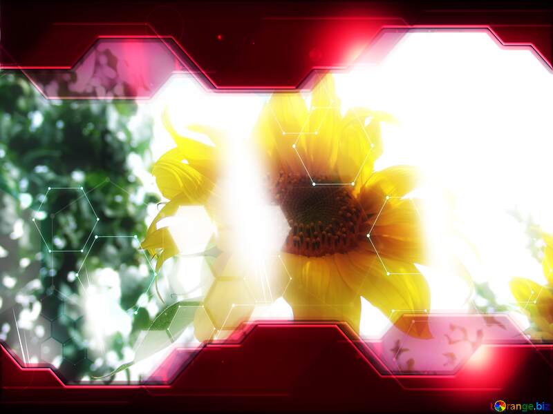 Sunflower Technology business concept Hi-tech Elements red background №2035