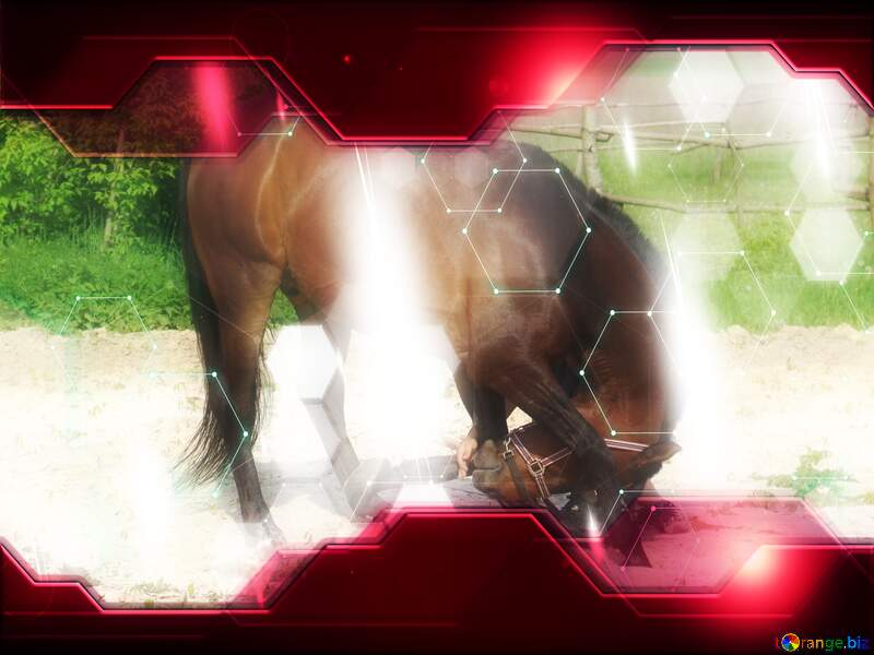Horse training Technology business concept Hi-tech Elements red background №1059