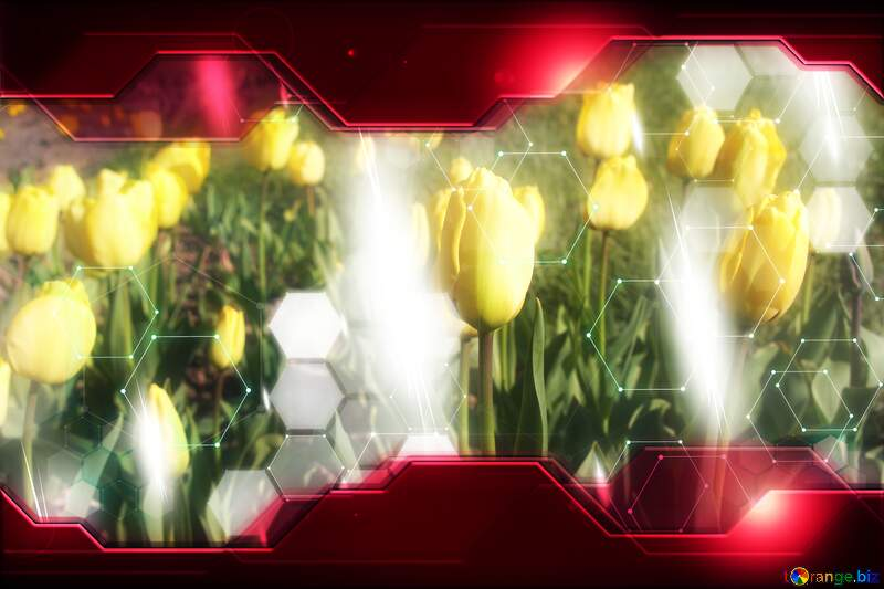 Yellow Tulips Flower Technology business concept Hi-tech Elements red background №1640