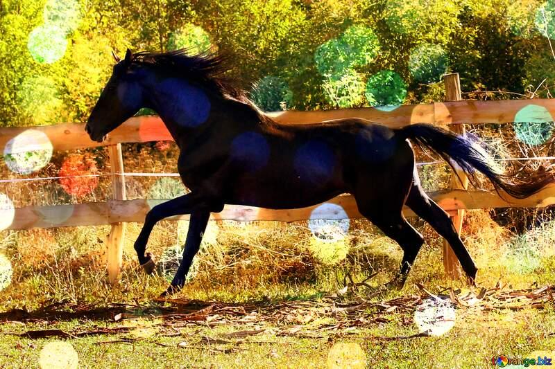 Black horse bokeh  background №36651