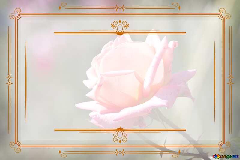 Pink rose Vintage frame retro clip art №4210