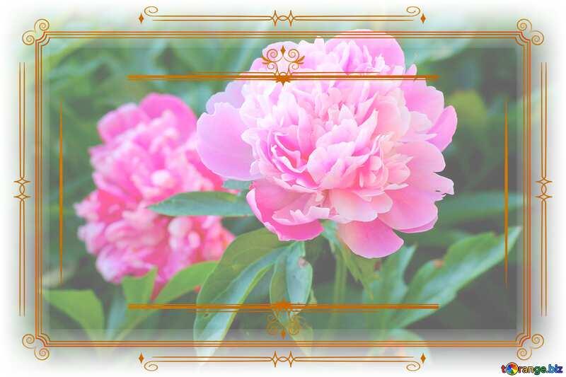 Flowers of peonies Vintage frame retro clipart №32639