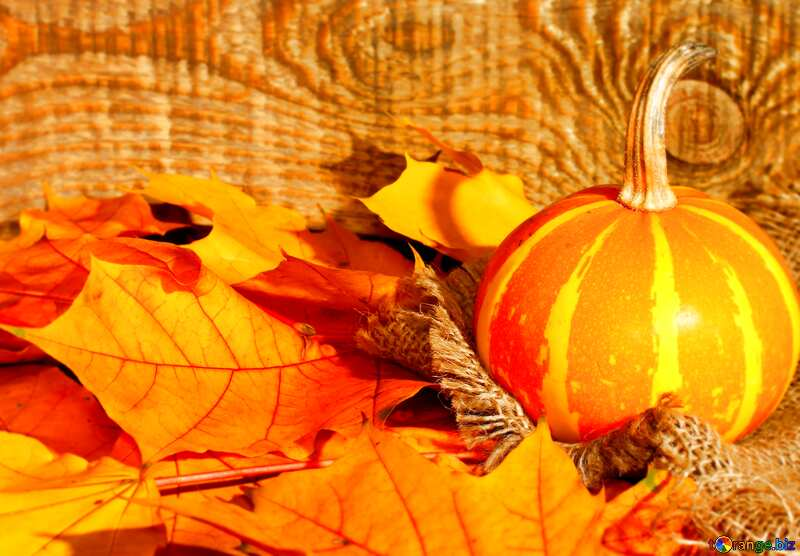 Beautiful picture with pumpkin and autumn leaves blur frame №35453
