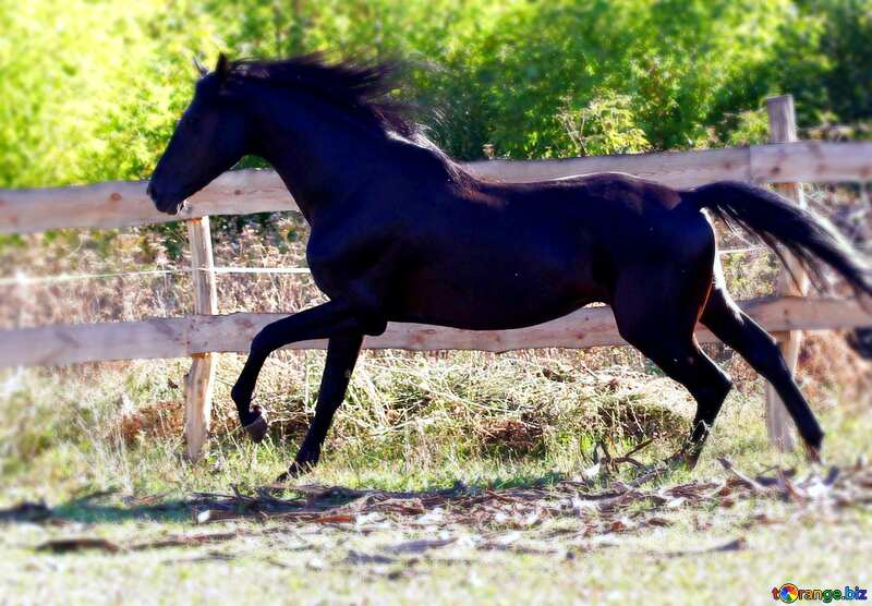 Download free picture Black horse blur frame on CC-BY License ...