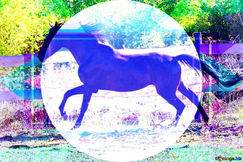 Black horse template infographic presentation №36651