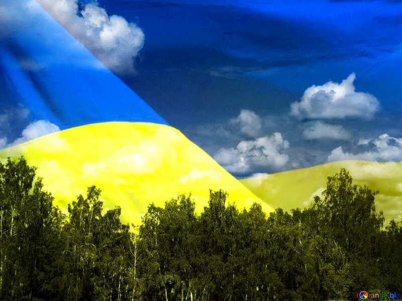 Ukraine forest №24733