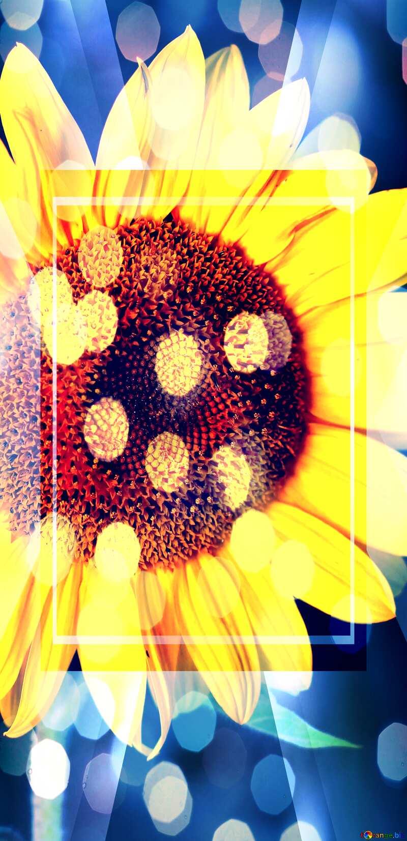 Sunflower flower design template №32797