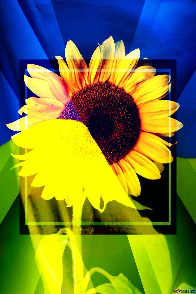 Sunflower Ukraine background №32797