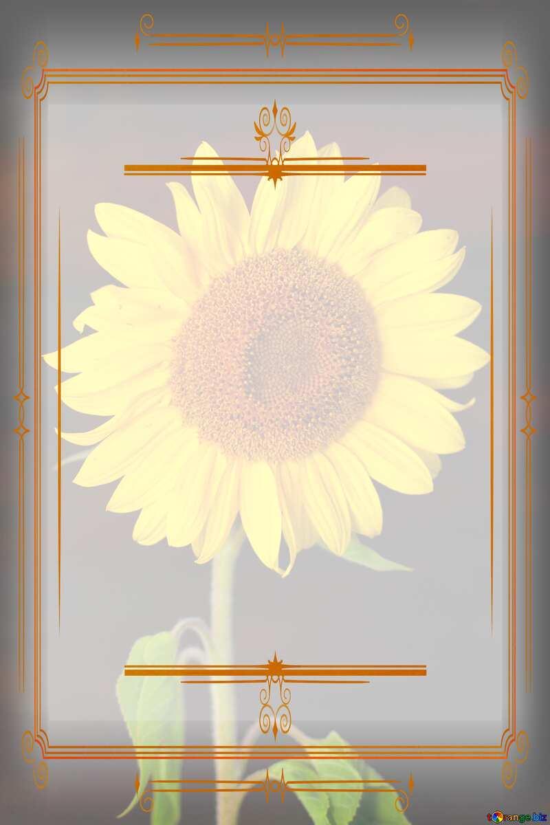 Sunflower flower  Vintage frame retro clip art №32797