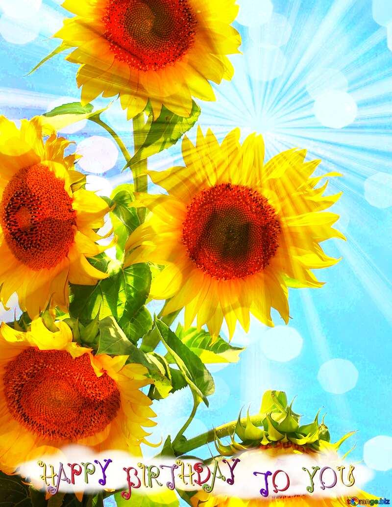 Bouquet sunflowers sunlight happy birthday card №32698