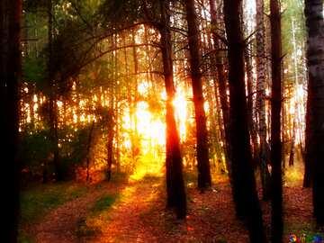 El efecto de la luz. Colores muy vivos.
