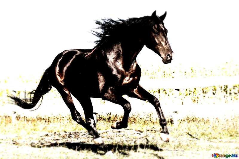 Horse dark blur frame №36664