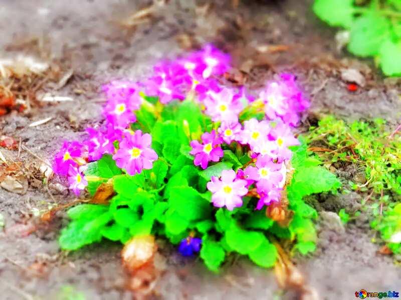 Soft blurred background purple flowers №52477