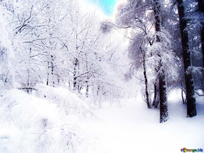 Soft blurred Snowy Forest №10536