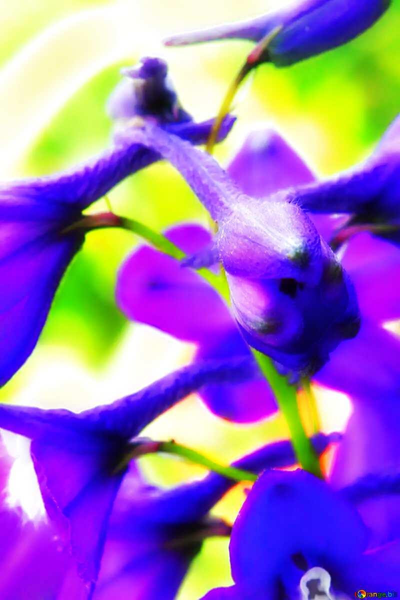 Soft blurred background purple violet flowers №54412