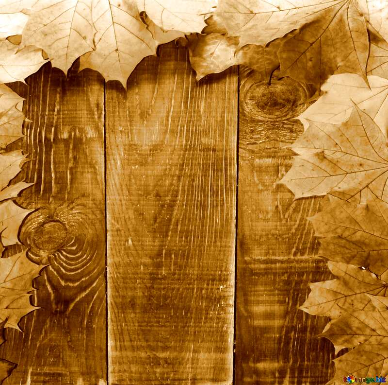 Background blank cards for autumn leaves sepia №35237