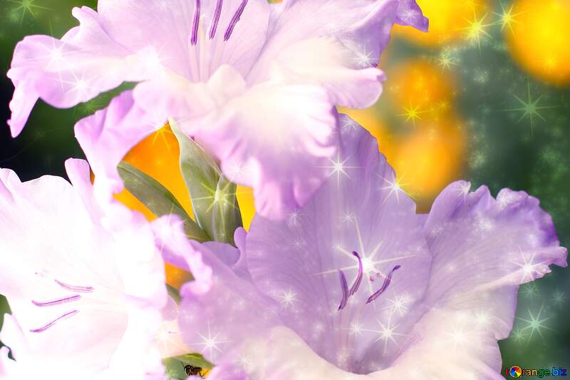 Beautiful flowers for congratulations twinkling stars №33743