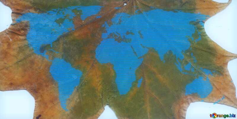 Texture dry wood leaf World Map №42667