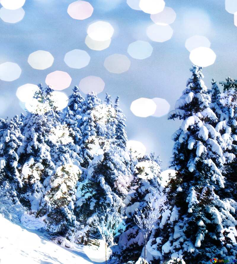 Christmas Tree Winter Forest Snow background №10526