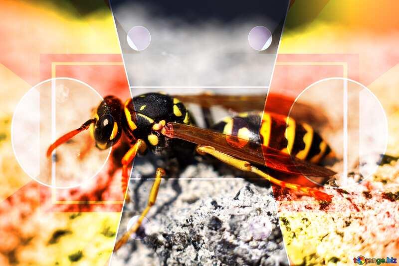 Wasp Business design pattern №1796