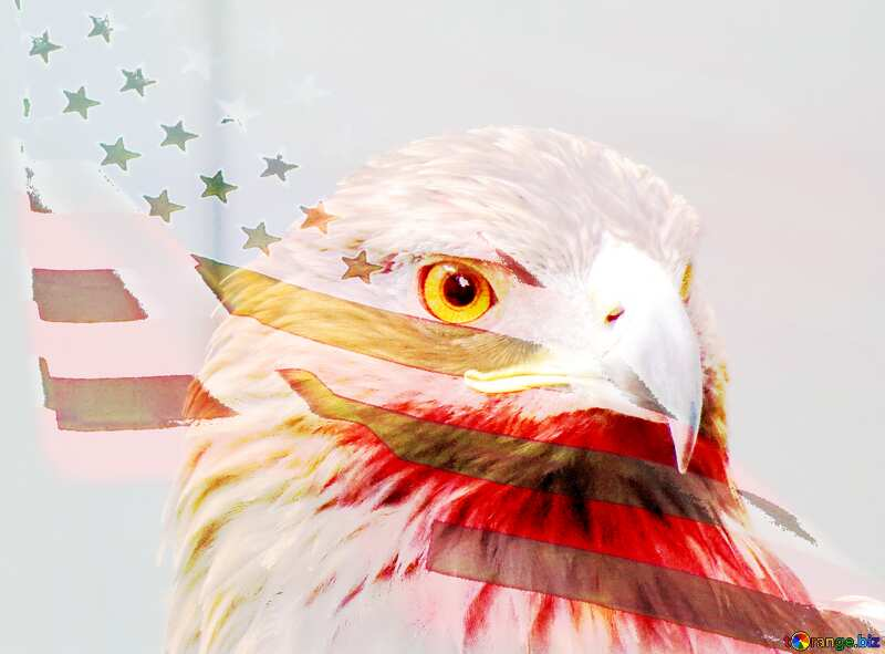 American  eagle №45229