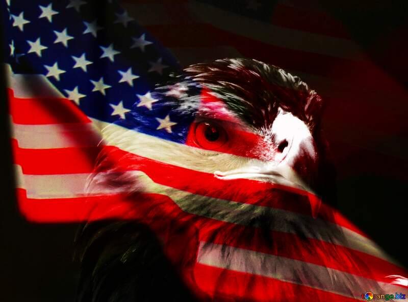 Golden eagle USA American  background №45229