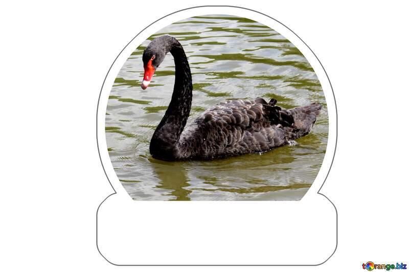 Sticker Black swan №54336