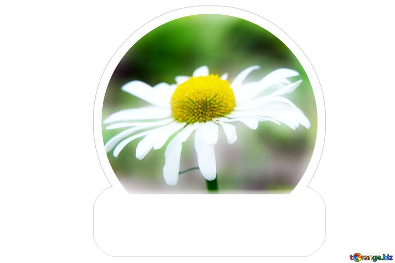 Sticker daisy flower №54404