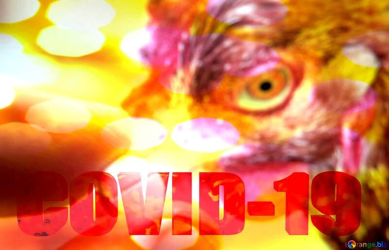 Tablets for birds 3d text Corona virus Covid-19 Coronavirus disease 2019 2020 №20199