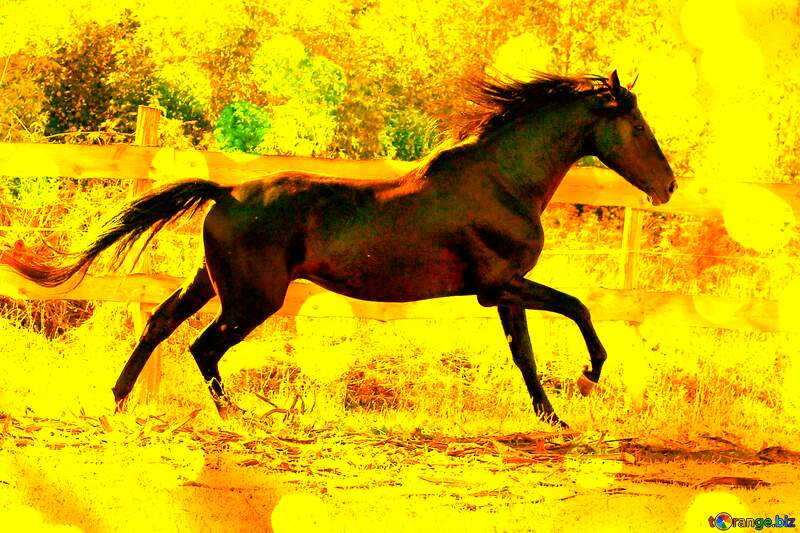 Black horse Yellow illustration №36651