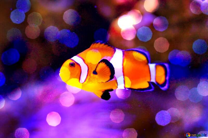 fish clown bokeh  background №53839