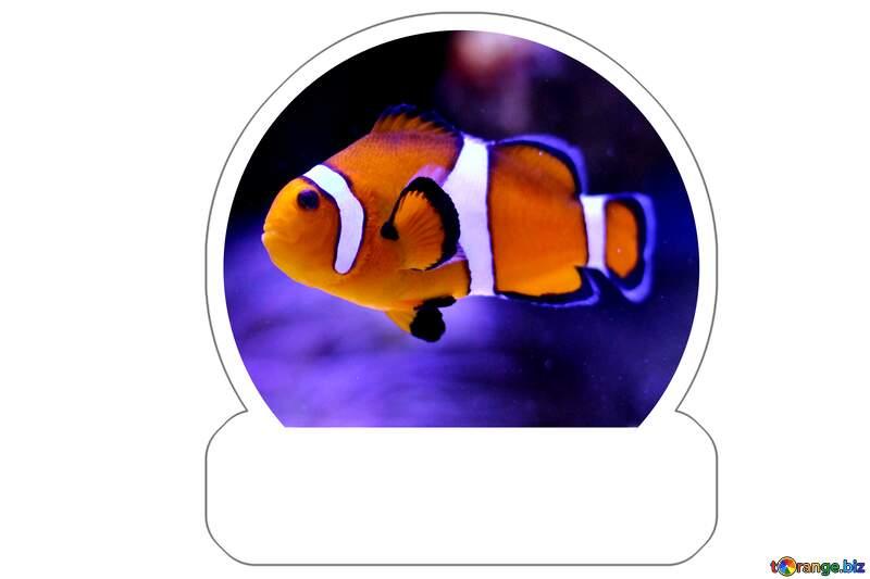 Nemo fish Sticker №53839