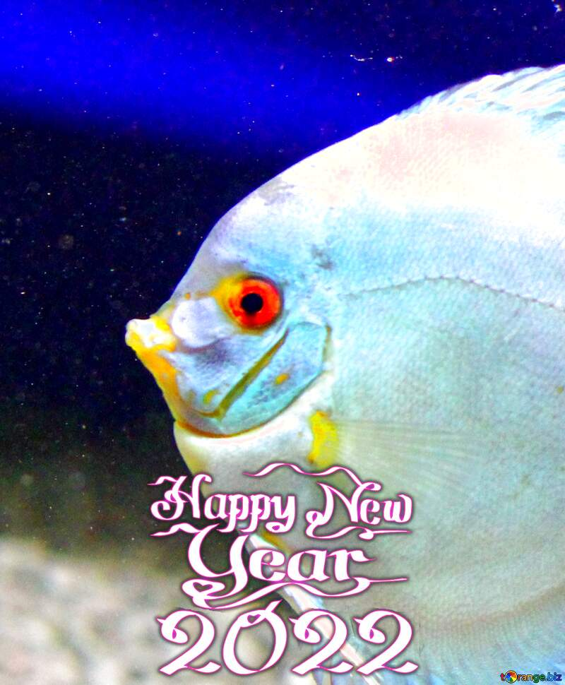 White  fish in blue water Happy New Year 2021 №53963