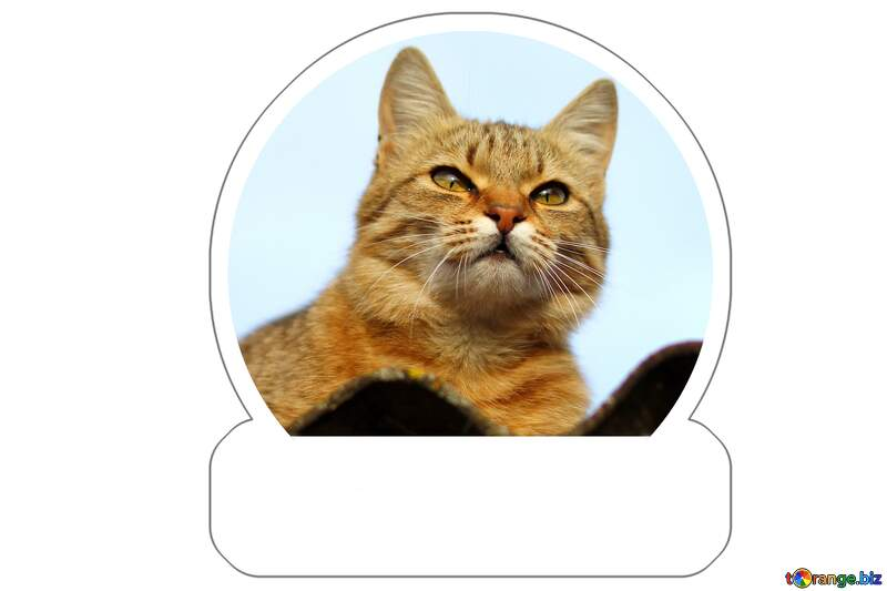 Cat on the roof Sticker template №36543
